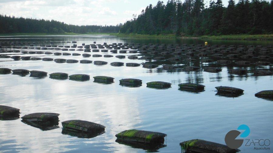Zapco Aquaculture